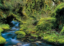CU14-Routeburn-Track-Fiordland-Gilbert-van-Reenen