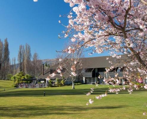 CroppedFocusedImageWyIxMTAwIiwiNTAwIiwiNTAtNTAiXQ-Edgewater-Spring-Blossom-Tree-with-Hotel-Behind-Springtime